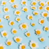 白いお花がたくさん並んでる