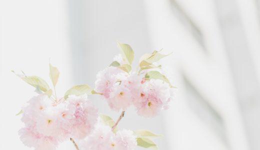 花組退団者の方について。花野じゅりあさんや桜咲彩花さん、亜蓮冬馬さん。